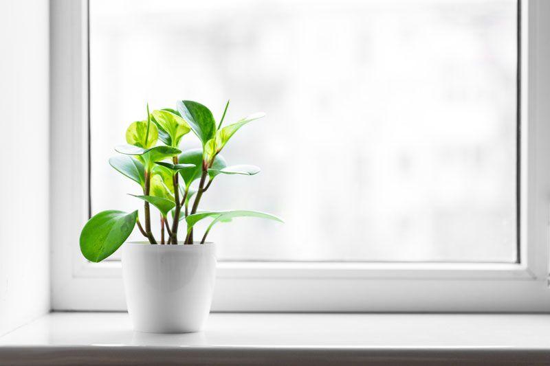 plant in the windowsill